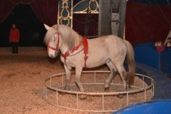 2012-11-23-Cirque-Zavatta